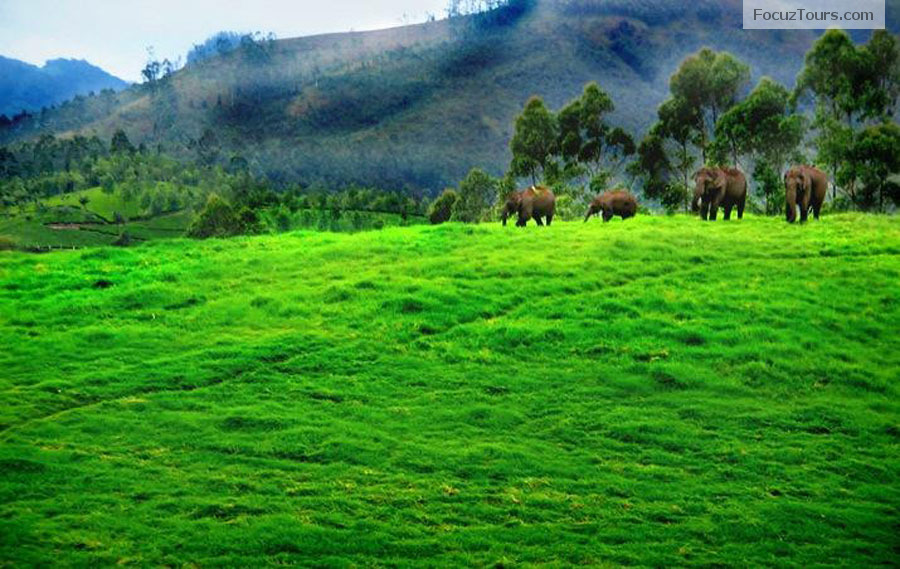 Vagamon Kerala Most Beautiful Places In Kerala