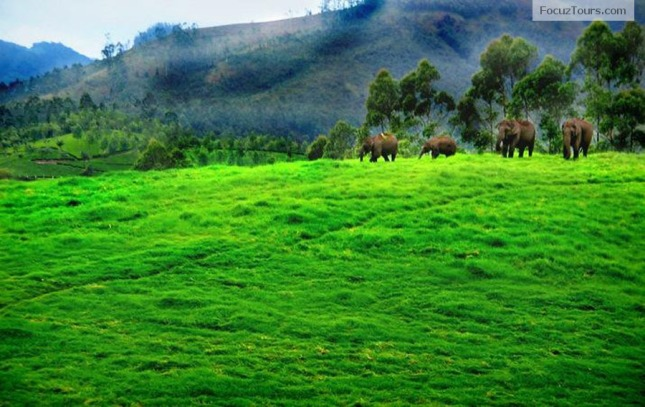 Hill Stations In Kerala Most Beautiful Places In Kerala